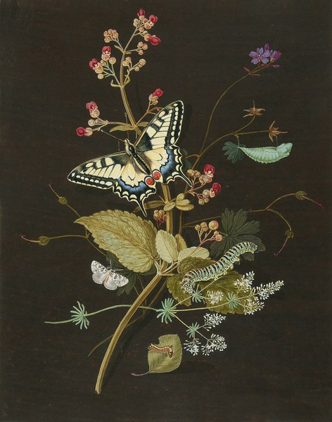 A Painting of Butterflies